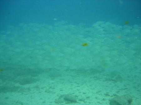 Rubicon Diving,Lanzarote Playa Blanca,Kanarische Inseln,Spanien