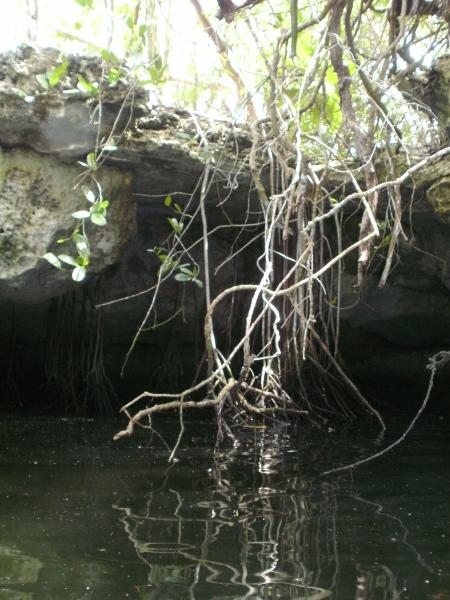 Green Horn Caletones,Kuba