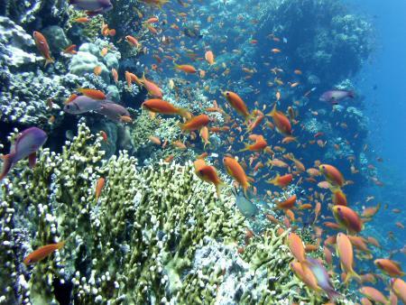 Orca Dive Club Tulip,Marsa Alam und südlich,Ägypten