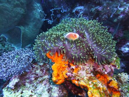 Island Retreat,Togian Island (Bomba),Sulawesi,Indonesien
