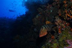 Sea Saba Dive Center,Saba,Niederländische Antillen