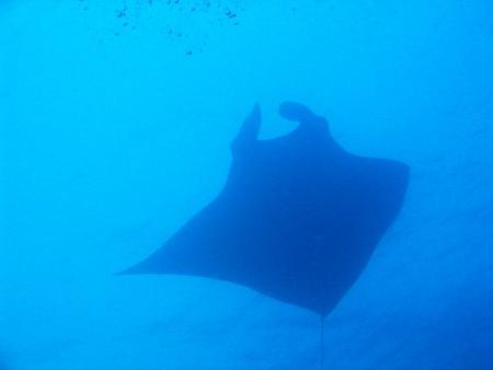 Aladdin Dive Safari,Koh Chang,Ranong,Armins Diveteam,Phuket,Andamanensee,Thailand
