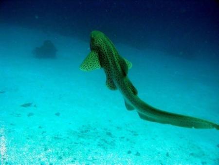Privat Dive Phuket,Andamanensee,Thailand