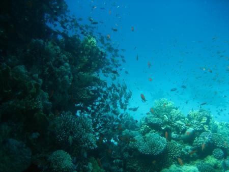 Al Mashrabiya Diving Center,SWDF,Hurghada,Ägypten