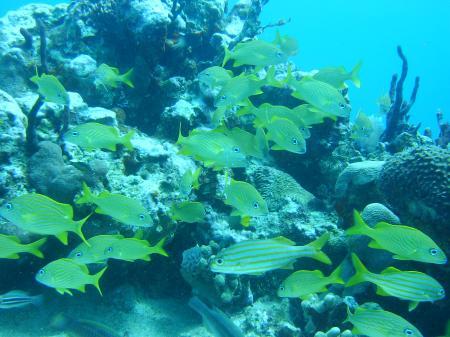 Das Dritte Riff,Boca Chica,Dominikanische Republik