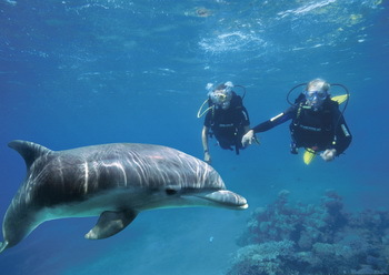 Diving with dolphins at Dolphin Reef in Eilat - © Israelisches Tourismusministerium