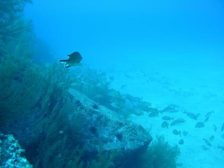 Atalaia Diving Center,Canico de Baixo (Madeira),Portugal