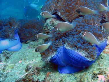 Calypso Diving,Koh Samui,Golf von Thailand,Thailand