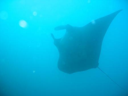 MS Zenab Safariboot der Extra Divers,Jemen
