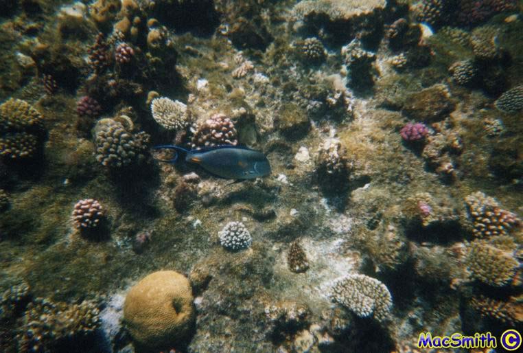 Hurghada - Gota Abu Ramada, Abu Ramada,Hurghada,Ägypten