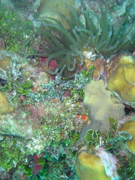 Marine Life Divers,Negril,Jamaika