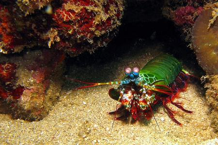 Bastianos Diving Resort Bunaken,Sulawesi,Indonesien