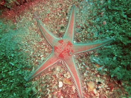 Dive Loft Krk,Vrbnik,Insel Krk,Kroatien