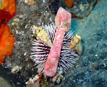 Jandia Divers,Fuerteventura,Kanarische Inseln,Spanien