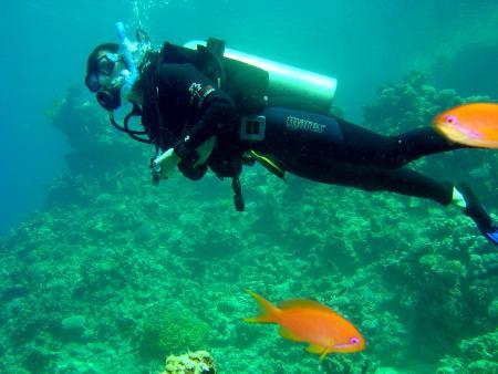 Sinai Dive Club,Sharks Bay,Sharm el Sheikh,Sinai-Süd bis Nabq,Ägypten