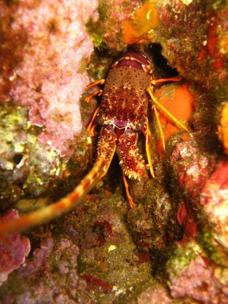 Areamare Diving,Cannigione (Sardinien),Sardinien,Italien