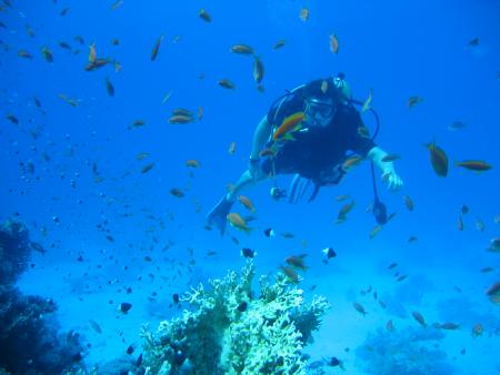 Tauchabenteuer (ex Dive-Callino),Hurghada,Ägypten