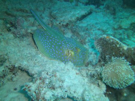 Apo Reef Club,Calintaan,Occ.Mindoro,Philippines,Philippinen
