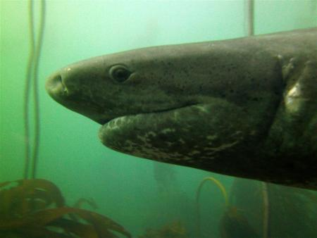 Sharkexplorers,Simonstown,Südafrika
