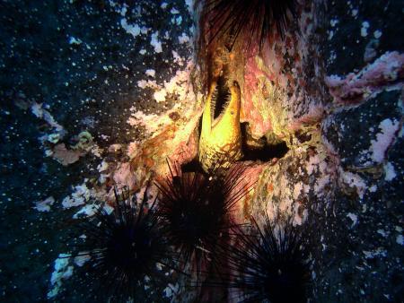 absolute diving!  Puerto del Carmen,Tauchzentrum Atlantica,Pto. del Carmen,Lanzarote,Kanarische Inseln,Spanien