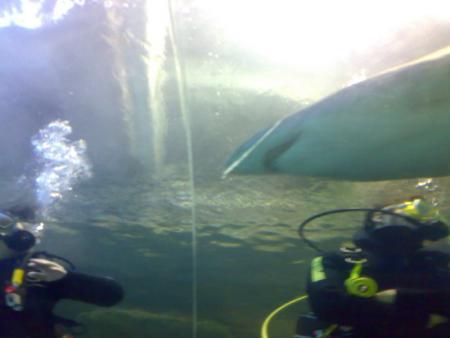 Oceanworld Manly,Sydney,Australien
