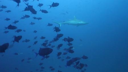 Joy Dive,Safari Island (ex Mushimasgali,Dhoni Mighili),Malediven