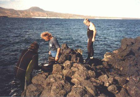 Northdiving,Arrieta,Lanzarote (alt - bis 2006),Kanarische Inseln,Spanien
