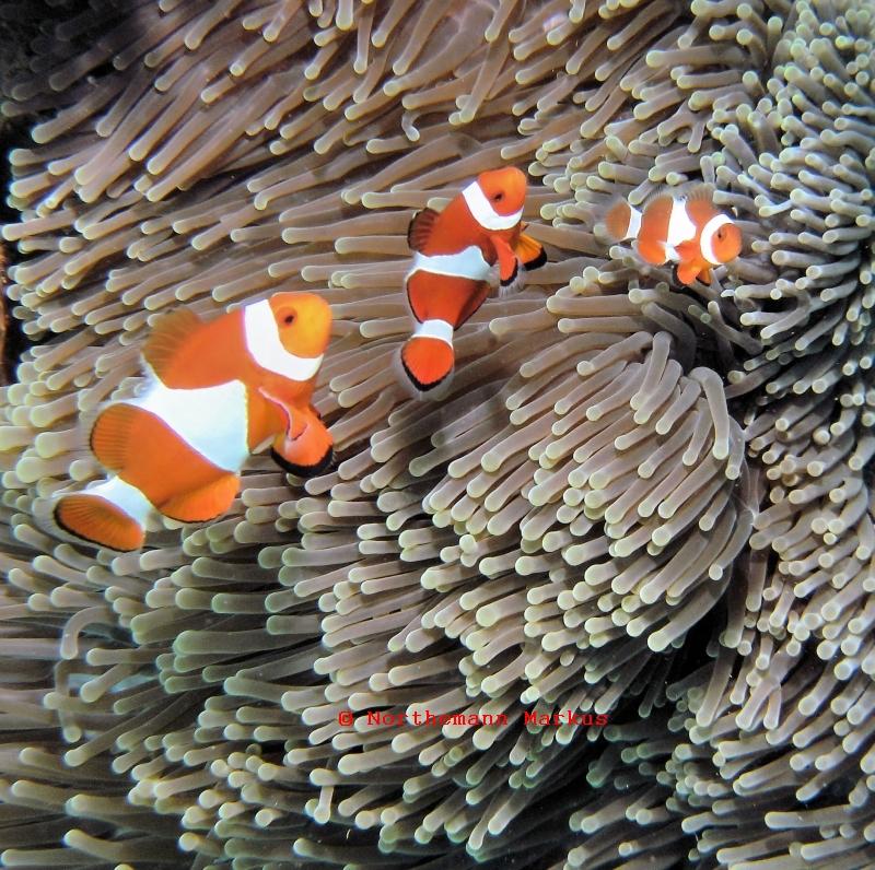 Dive-Philippinen, Dive-Philippinen,Philippinen