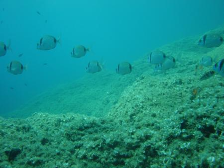 Orsoreale Diving (Elba),Italien