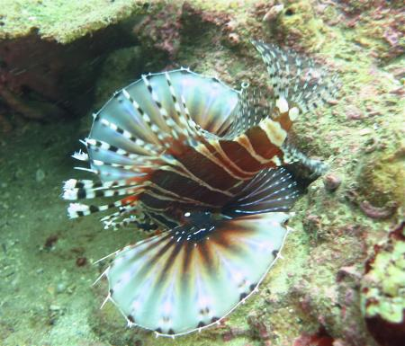 Mandarin Divers Marine Services,Hongkong
