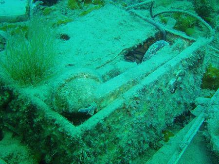 Ocean World Aldiana Tauchen Djerba Atlantide,Tunesien