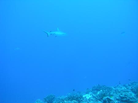 TOPdive,Fakarava North,Fun Dive,Moorea,Französisch-Polynesien