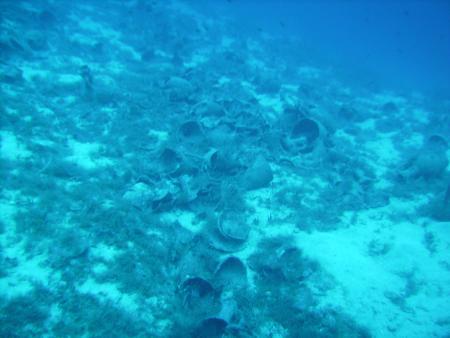 Scuba Kreta Diving Center,Chersonissos,Kreta,Griechenland