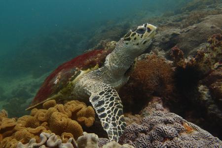 Extra Divers Al Sawadi,Oman