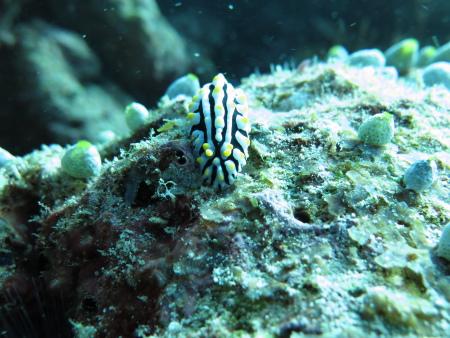 Komandoo,Pro Divers,Malediven