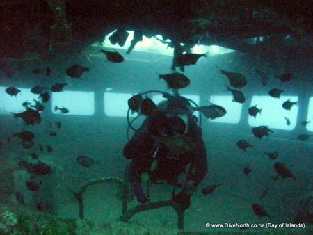 Dive North/Keridive,Northland,Kerikeri/Paihia,Neuseeland