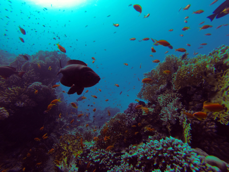 Diving Forever Company,Hurghada,Ägypten