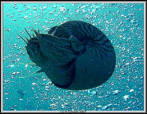 Ocean Hunter I, Palau und Yap allgemein,Palau