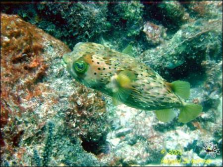 Andrea I,Bonaire,Niederländische Antillen