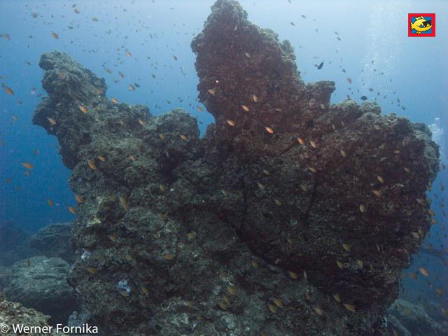 Die Kralle - immer umringt von vielen bunten Fischen, Tauchen La Palma, Kanaren, Tauchplätze, Kanarische Inseln/La Palma/La Garra (Kralle), Spanien, Kanarische Inseln