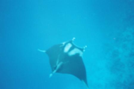 Extra Divers,Ras Nasrani,Melia Sinai Paradise Resort,Sharm El Sheikh,Sinai-Süd bis Nabq,Ägypten