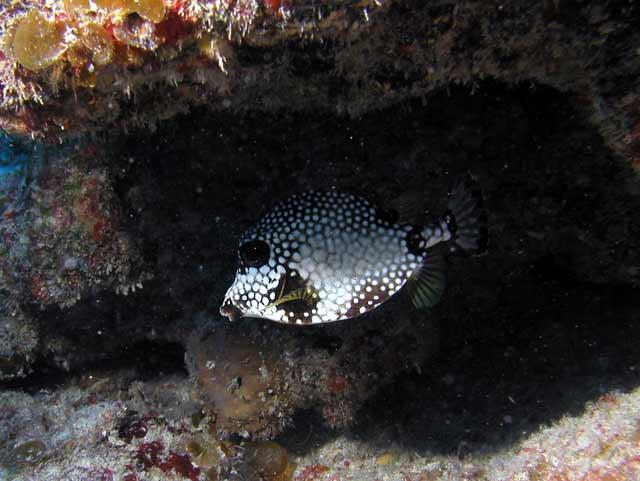 Punta Cana, Catalina Island,Punta Cana,Dominikanische Republik