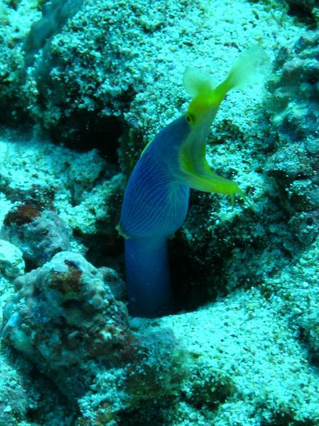 Reefseekers,Labuan Bajo,Allgemein,Indonesien