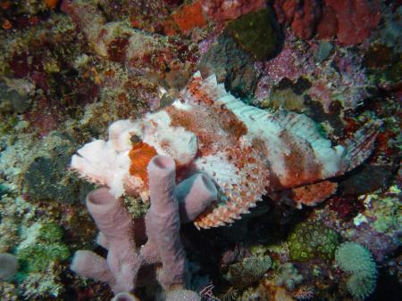 S.M.Y. Ondina,Indonesien