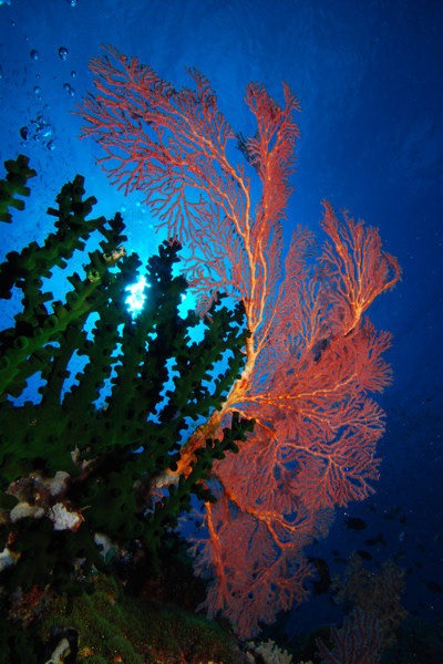 Milne Bay, Milne Bay,Papua-Neuguinea
