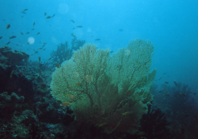 Vakarufalhi / Süd-Ari-Atoll, Vakarufalhi / Süd-Ari-Atoll,Malediven