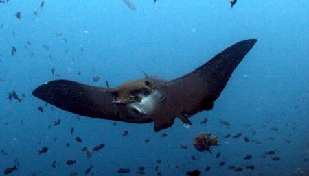 Galapagos Allgemein,Galapagos,Ecuador