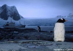 Antarktistour - M.V. Grigoriy Mikheev,Antarktis