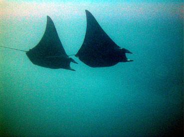 Rasdhoo Atoll Divers,Kuramathi,Malediven
