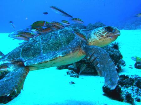 Aquatis Divingcenter Lanzarote,Kanarische Inseln,Spanien